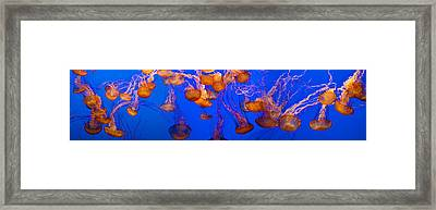 View Of Jelly Fish Underwater Framed Print