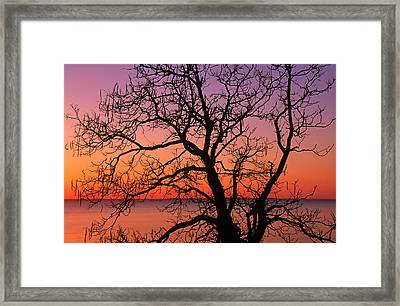 View Of Ocean Through Silhouetted Tree Framed Print