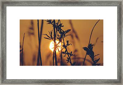 View Of Sun Setting Behind Long Grass D Framed Print