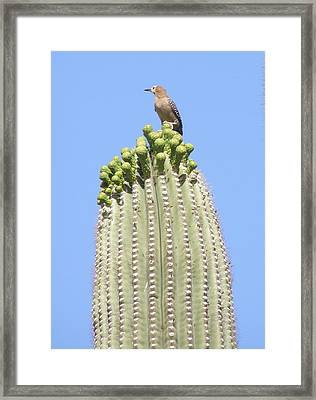 View Of The Desert Framed Print by Jeanette Oberholtzer