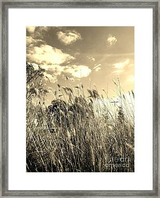 View Of The Field Mouse - Sepia Framed Print