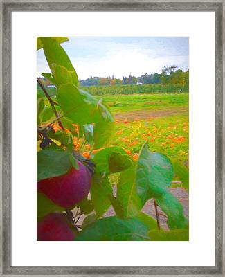 View Of The Pumpkin Patch Framed Print