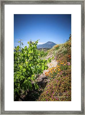 Vineyard View With Flowers, Winery In Casablanca, Chile Framed Print