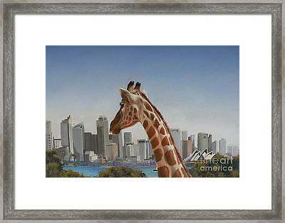 View Towards Sydney Framed Print by Louise Green
