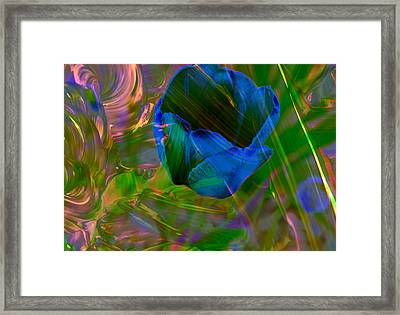 Viewing A Tulip Framed Print by Jeff Swan
