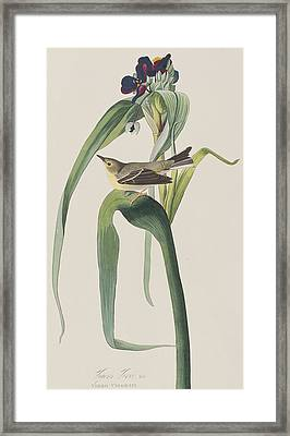 Vigor's Warbler Framed Print by John James Audubon