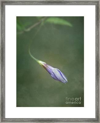 Vinca Framed Print by Priska Wettstein
