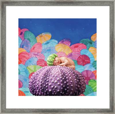Vince As A Sea Urchin Framed Print by Anne Geddes