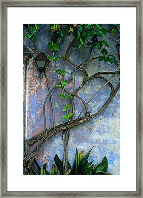 Vine And Wall Framed Print by Kathy Yates