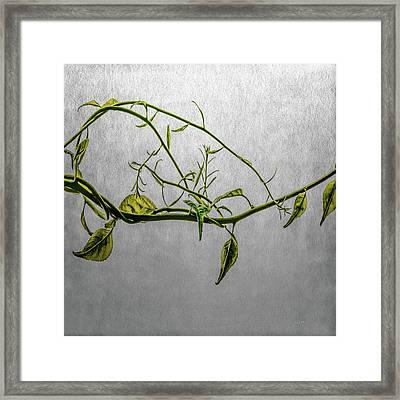 Vine Framed Print by Bob Orsillo