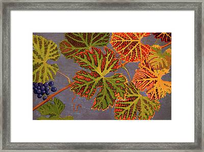 Vine Leaves And Ripened Grapes Framed Print by Philippe Robert