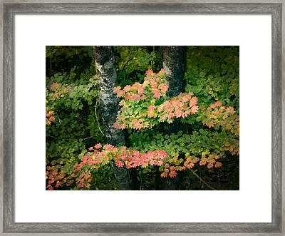 Vine Maple Color Framed Print by Jean Noren