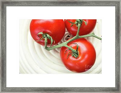 Vine Ripe Tomatos Framed Print by Edward Fielding