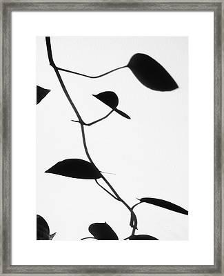 Vine Shadow Framed Print