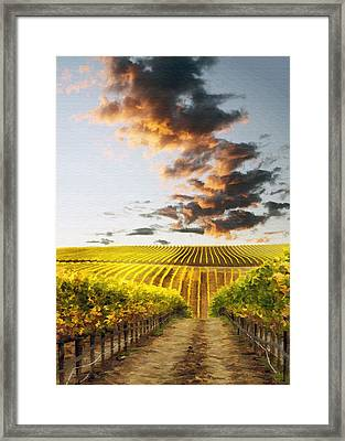 Vineard Aglow Framed Print by Sharon Foster