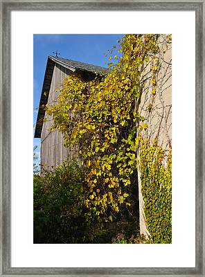 Vined Silo Framed Print by Tim Nyberg