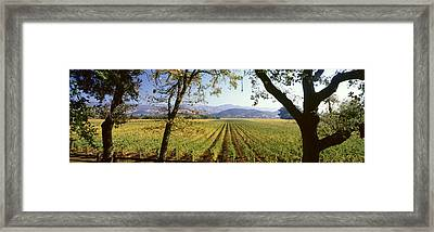Vines In A Vineyard, Far Niente Winery Framed Print by Panoramic Images