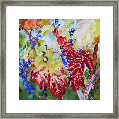 Vines In The Fall Framed Print