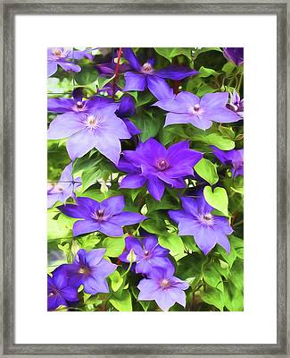 Vines Of Purple Clematis - Painterly Framed Print