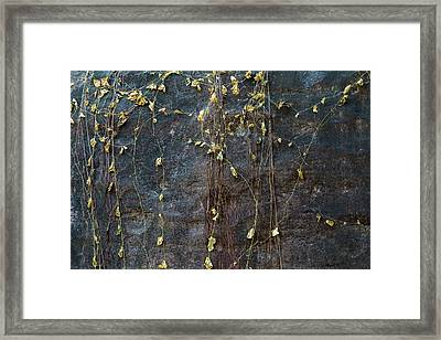 Framed Print featuring the photograph Vines On Rock, Bhimbetka, 2016 by Hitendra SINKAR