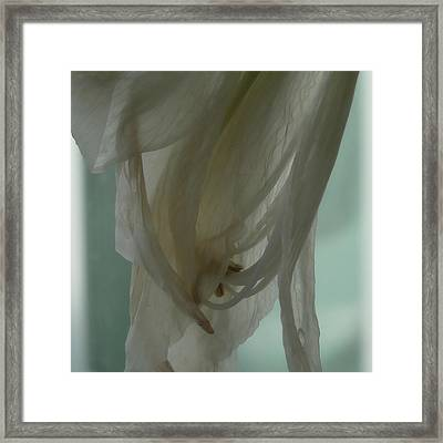 Vineta Framed Print