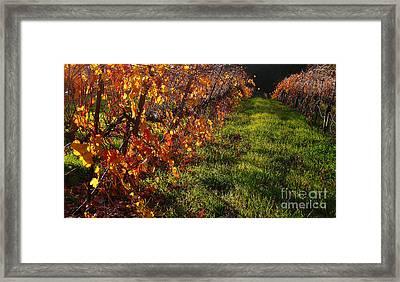 Vineyard 13 Framed Print by Xueling Zou