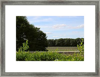 Harvest Framed Print by Brian Manfra