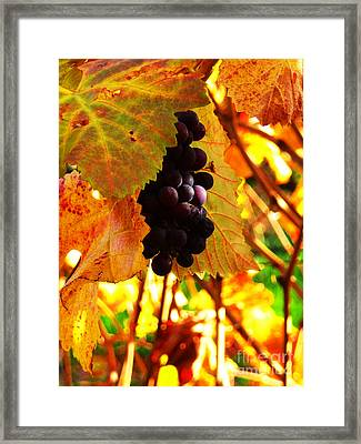 Vineyard 20 Framed Print by Xueling Zou