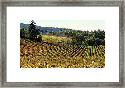 Vineyard 22 Framed Print by Xueling Zou