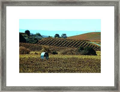 Vineyard 23 Framed Print by Xueling Zou