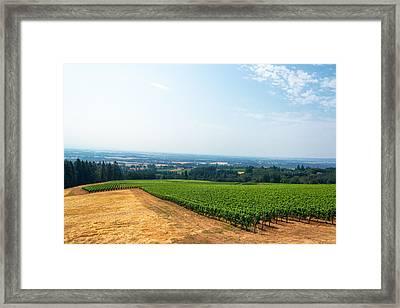 Vineyard And Willamette Valley Framed Print by Jess Kraft