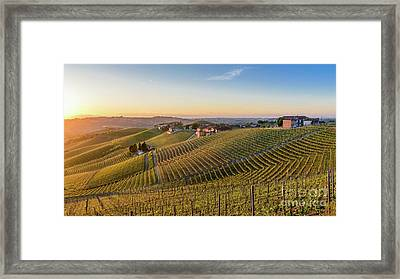 Vineyard At Barbaresco, Italy Framed Print
