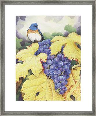 Vineyard Blue Framed Print by Amy S Turner