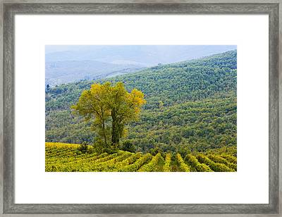 Vineyard  Chianti, Tuscany, Italy Framed Print by Yves Marcoux