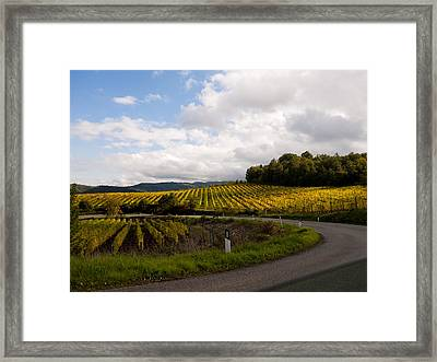 Vineyard Glow Framed Print by Rae Tucker