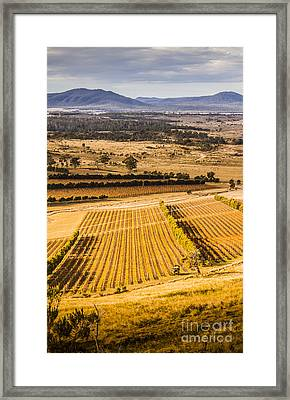 Vineyard Harvest Landscape Framed Print