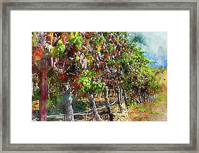 Vineyard In Napa Valley California During The Fall Framed Print by Brandon Bourdages