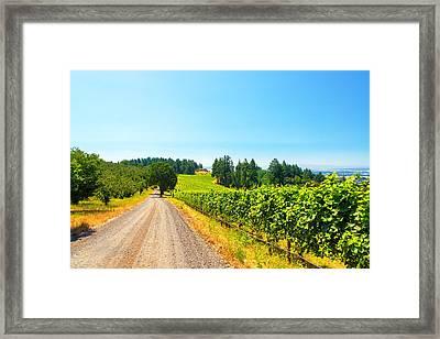 Vineyard In Rural Oregon Framed Print by Jess Kraft