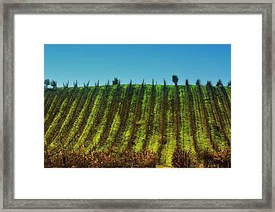 Vineyard In Tapihue 2 Framed Print by Fernando Lopez Lago