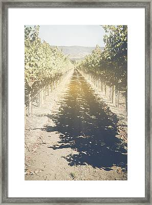 Vineyard In The Fall With Vintage Instagram Style Filter Framed Print