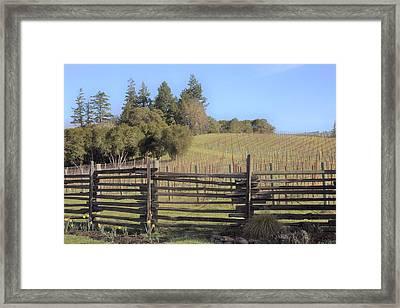 Vineyard In The Spring Framed Print