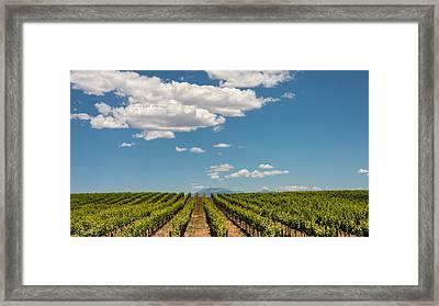 Vineyard Framed Print by Joseph Smith