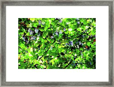 Vineyard Framed Print by Lanjee Chee