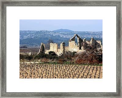 Vineyard Framed Print by Luiz Felipe Castro