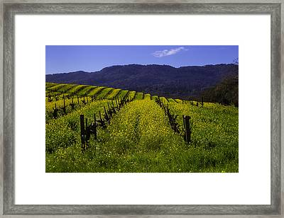 Vineyard Mustard Framed Print by Garry Gay