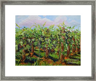 Vineyard Of Chateau Meichtry - Ellijay Ga - Plein Air Painting Framed Print by Jan Dappen