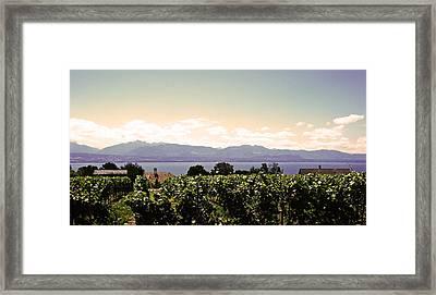 Vineyard On Lake Geneva Framed Print