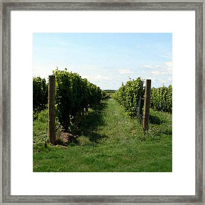 Vineyard On The Peninsula Framed Print by Michelle Calkins