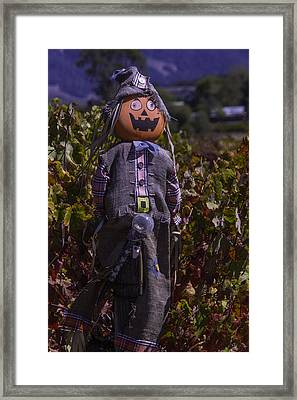 Vineyard Scarecrow Framed Print by Garry Gay