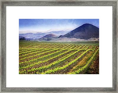 Vineyard Framed Print